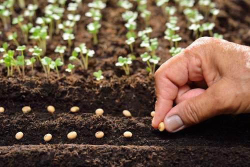Tudo o que precisa saber para  semear no seu jardim