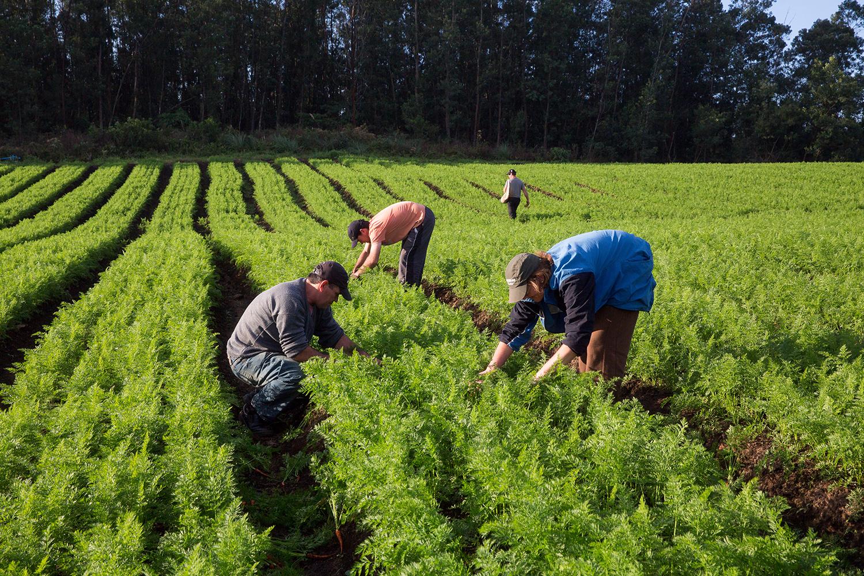 agricultura familiar o que é