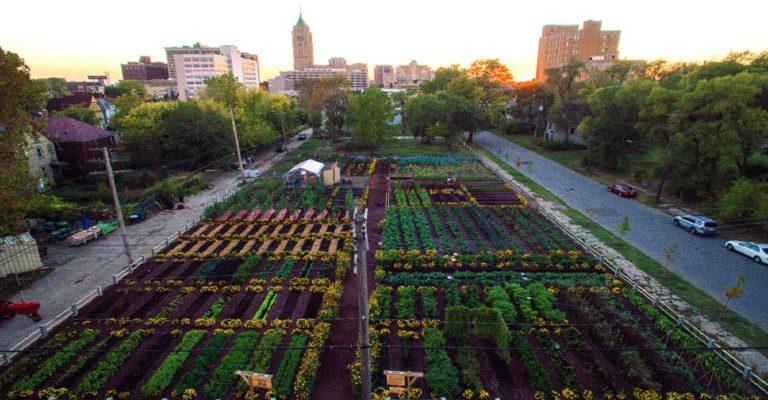 agricultura urbana ecologica