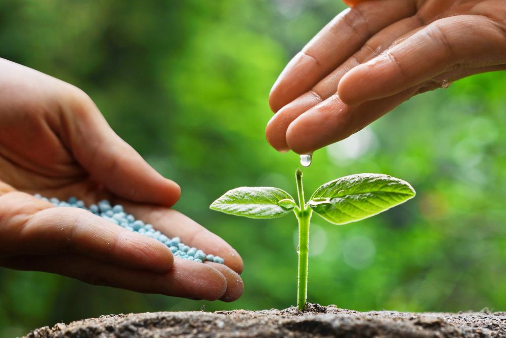 deficiência de nutrientes nas plantas pdf