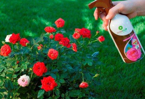 fertilização foliar