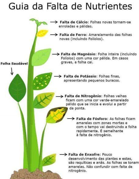 deficiência de nutrientes nas plantas