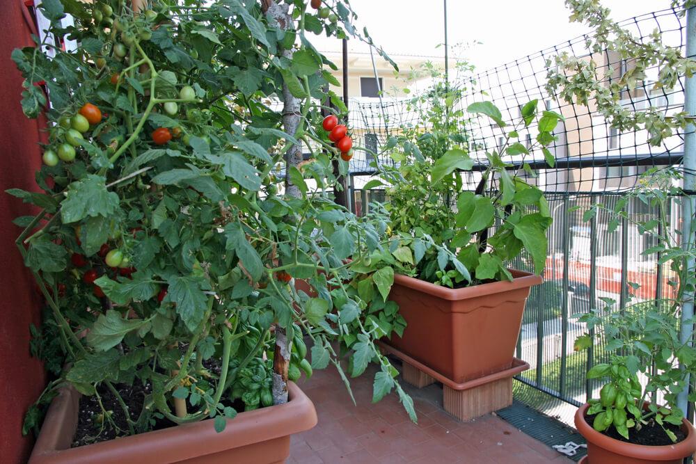 como fazer uma horta em apartamento