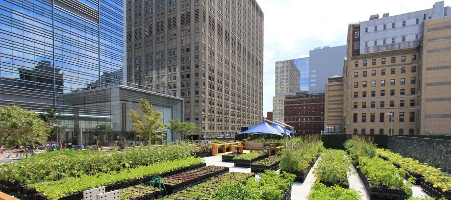 agricultura urbana o que é