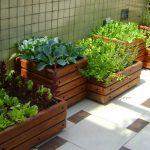 Como fazer uma horta em apartamento: ideias para ter uma