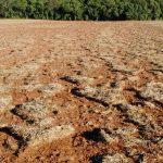 Fatores que influenciam a compactação do solo e as suas consequências no desenvolvimento das culturas (Parte I)