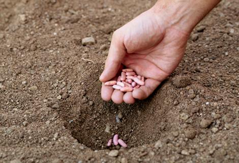 o que semear no jardim em outubro