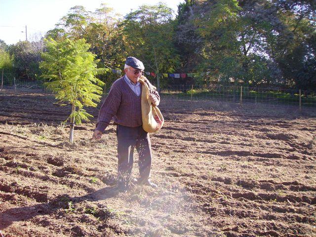 como semear grama no jardim