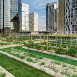 Sabe em que consiste a agricultura urbana? Este artigo pode ajudar a entender!
