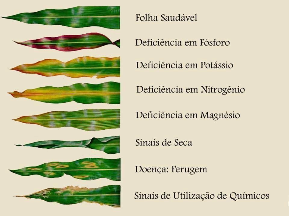 deficiencia de nutrientes sintomas
