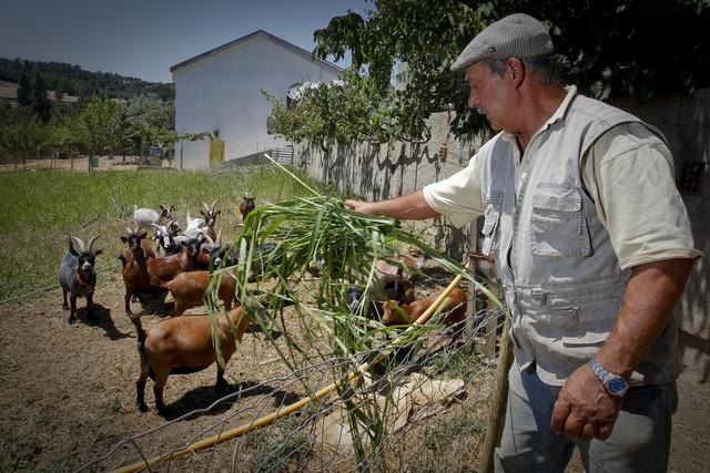 agricultura familiar portugal