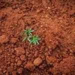 Fatores que influenciam a compactação do solo e as suas consequências no desenvolvimento das culturas