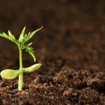 Aprenda a interpretar uma análise ao solo: avaliação da sua fertilidade