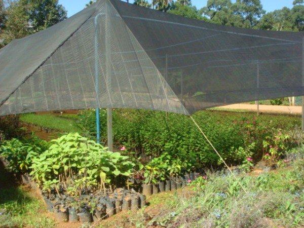 como proteger as plantas do solo