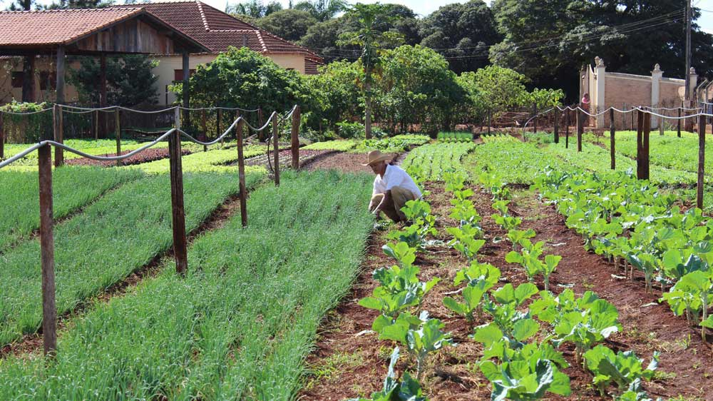agricultura familiar pdf