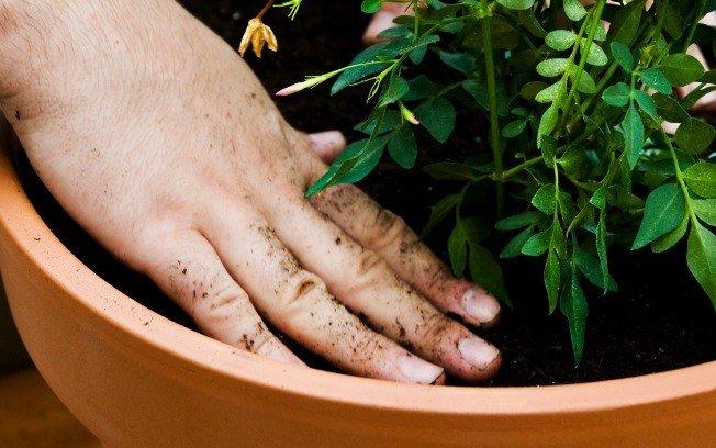 dicas para economizar água no jardim