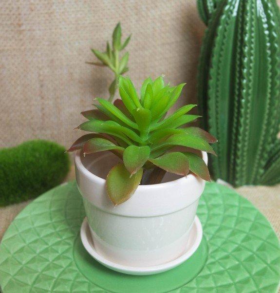 proteger as plantas do sol