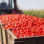 Comércio agroalimentar da UE subiu 2,2 mil milhões em julho
