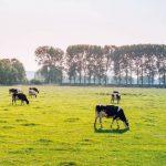 Os passos fundamentais para gerir a sua exploração agrícola