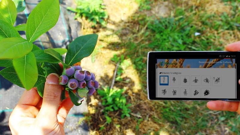 gestão agrícola software