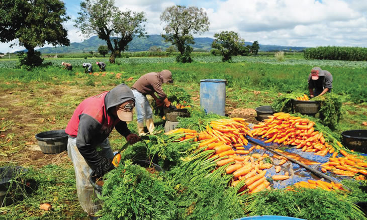 agricultura sustentavel vantagens e desvantagens
