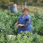 Tudo o que precisa saber sobre a agricultura social