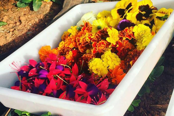 flores comestiveis jumbo
