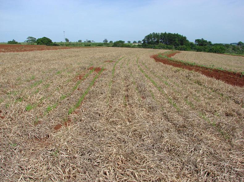 mobilização do solo em agricultura biologica