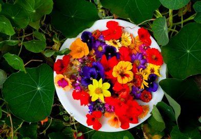 Flores comestíveis: poderá ser uma aposta do mercado agro-alimentar?