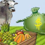 Saiba o que  condiciona a escolha de um sistema de culturas agrícola