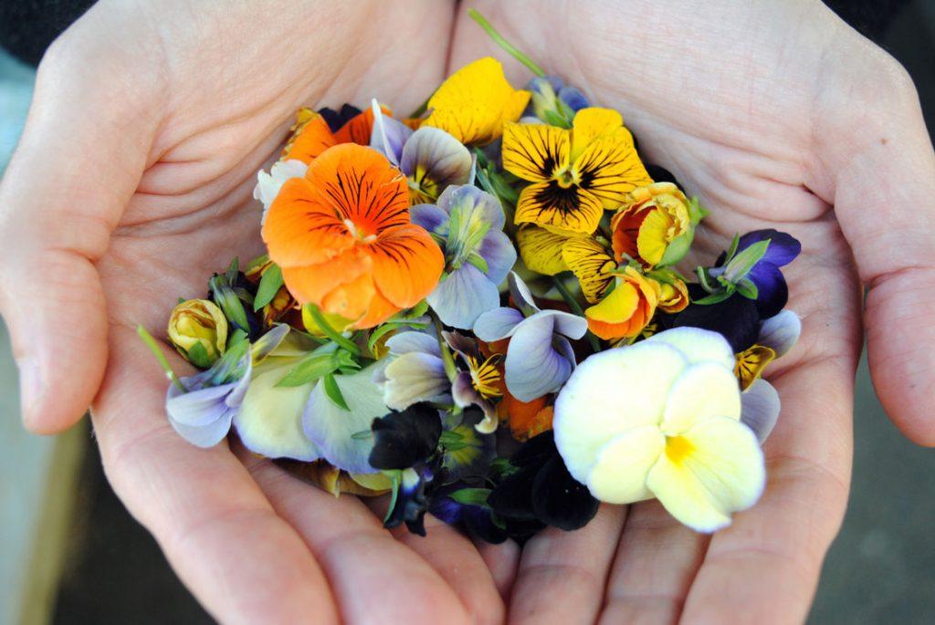 flores comestiveis