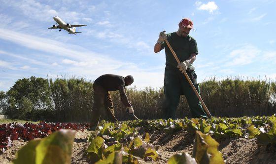 agricultura social o que é