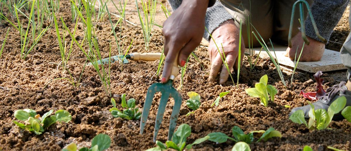agricultura social