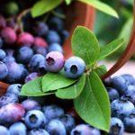 Empresa ucraniana de cultivo de pequenos frutos procura projectista de pátios agrícolas