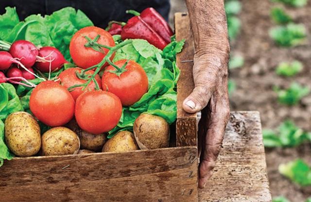 agricultura sustentavel slideshare