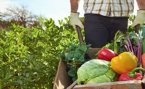 agricultura sustentavel exemplos