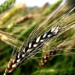 Como vai o Brexit afetar o mercado agrícola? 5 previsões