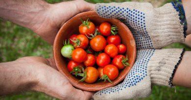 A importância da utilização de culturas agrícolas alternativas: contextualização