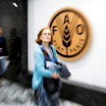 """FAO e Colégio F3 debatem """"A Construção do Direito Humano à Alimentação Adequada em Portugal"""" em Lisboa"""