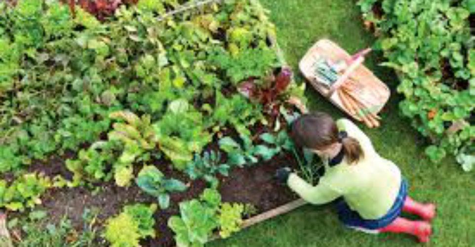 como preparar o solo para hortaliças