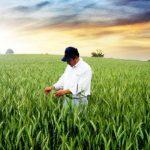OPORTUNIDADE: Bolsa de investigação para Mestre nas áreas das Ciências Agrárias ou áreas afins