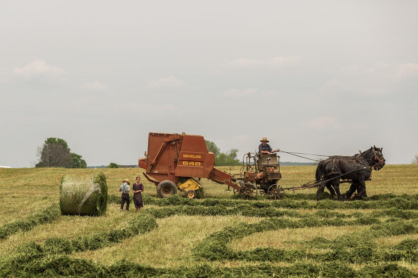 empresa agrícola familiar