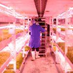 Agricultura em ambiente controlado: conheça esta tendência