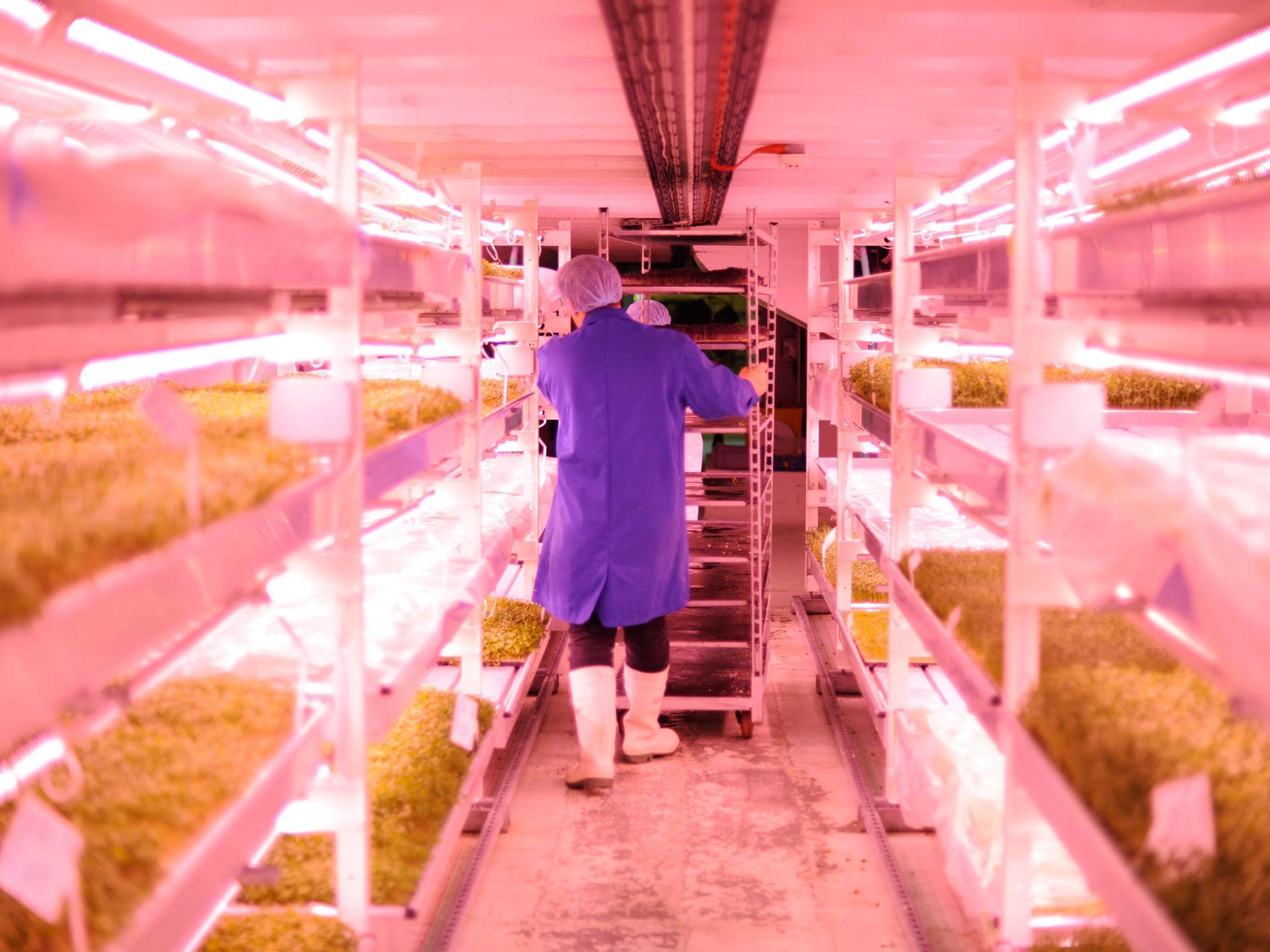 agricultura em ambiente controlado