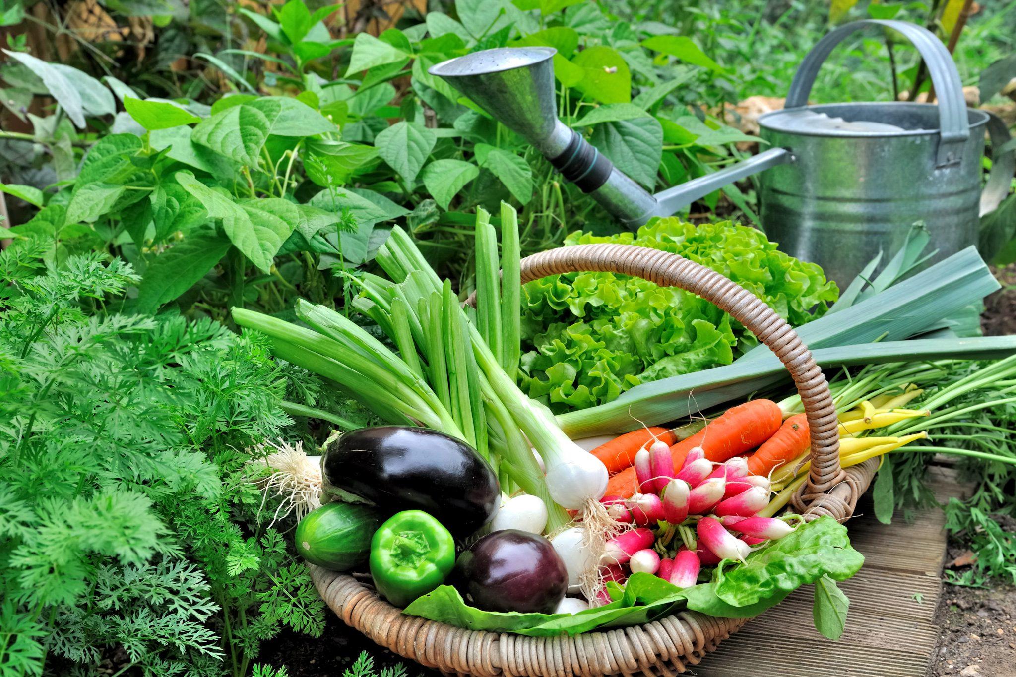 como preparar o solo para horta organica