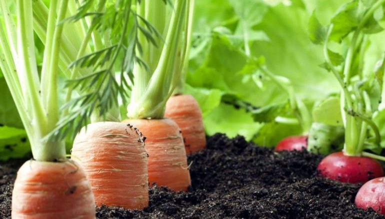 como preparar o solo de uma horta organica