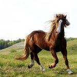 PAN quer cavalos como animais de companhia