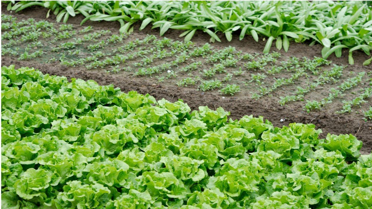 como preparar o solo para uma horta