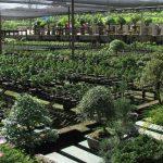 Oferta de Emprego: Técnico de Produção de plantas hortícolas em viveiro