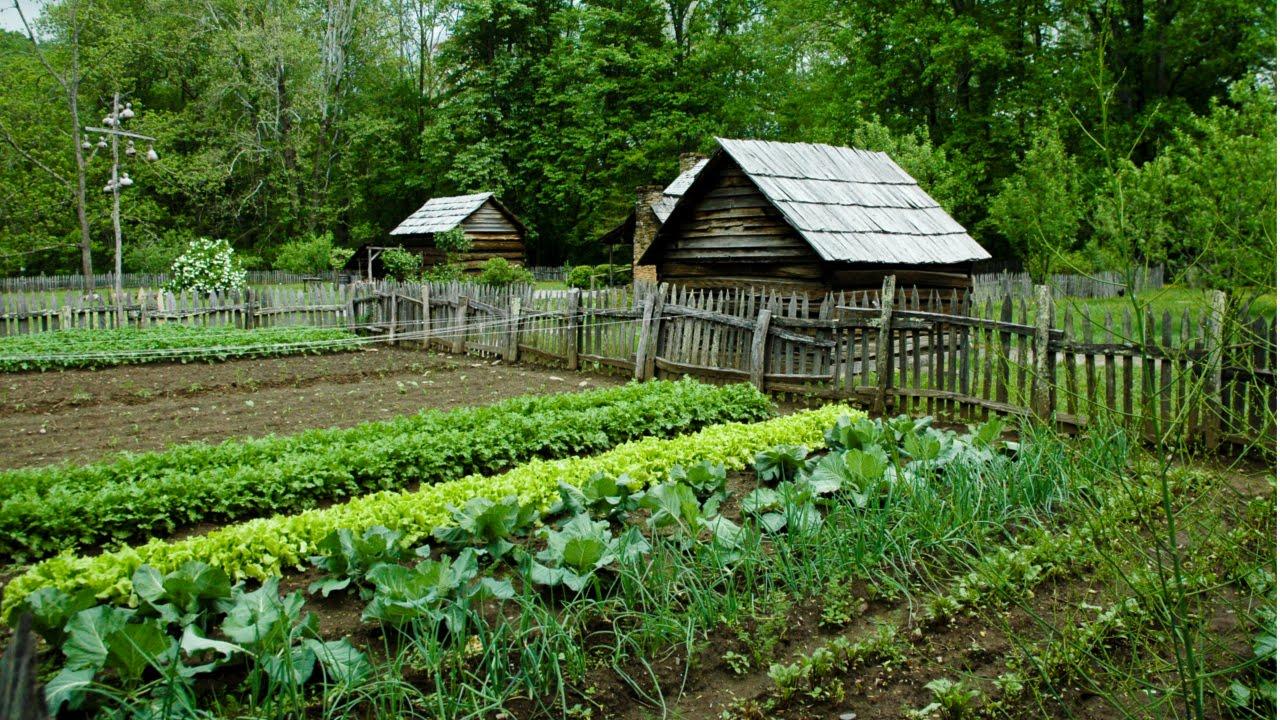 como preparar o solo para fazer uma horta